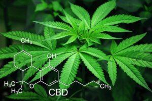 CBD como mejor cannabinoide
