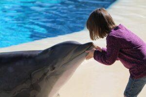 delfinoterapia: beneficios