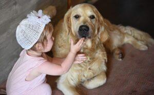 golden retriever es un perro único para terapia con mascotas