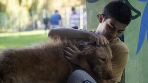 El perro de terapia